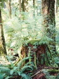 Oregon Forest Wedding from Erich McVey Photography | Style Me Pretty /// love the photograph of just the stump/woods