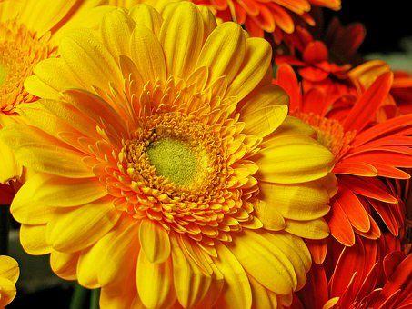 gerbera flor la naturaleza palabras de vida eterna pinterest