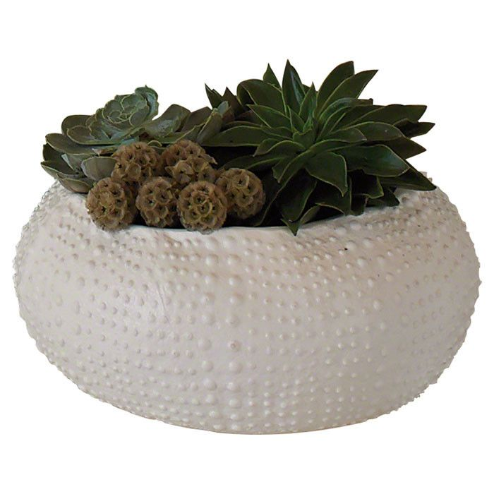 Ceramic Urchin Decorative Bowl