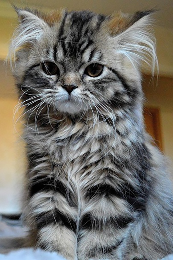 20 Pictures Of Cute Cats That Will Melt Your Heart Cute Cats Kittens Love Adorable Adorableanimals Animals Cat Ca Cute Cats Pretty Cats Kittens Cutest