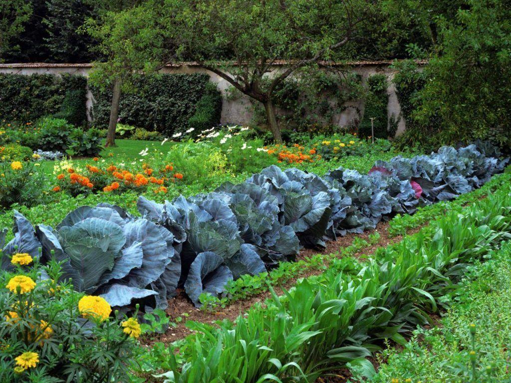 Stunning Modern Kitchen Garden Design Ideas  Vegetable garden