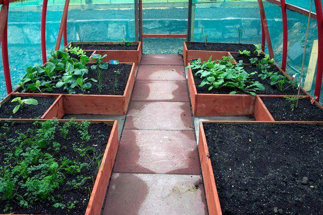 Mini Polytunnels For Small Gardens Small Polytunnels Custom Polytunnels Fruit C Fenced Vegetable Garden Backyard Vegetable Gardens Vegetable Garden Planning