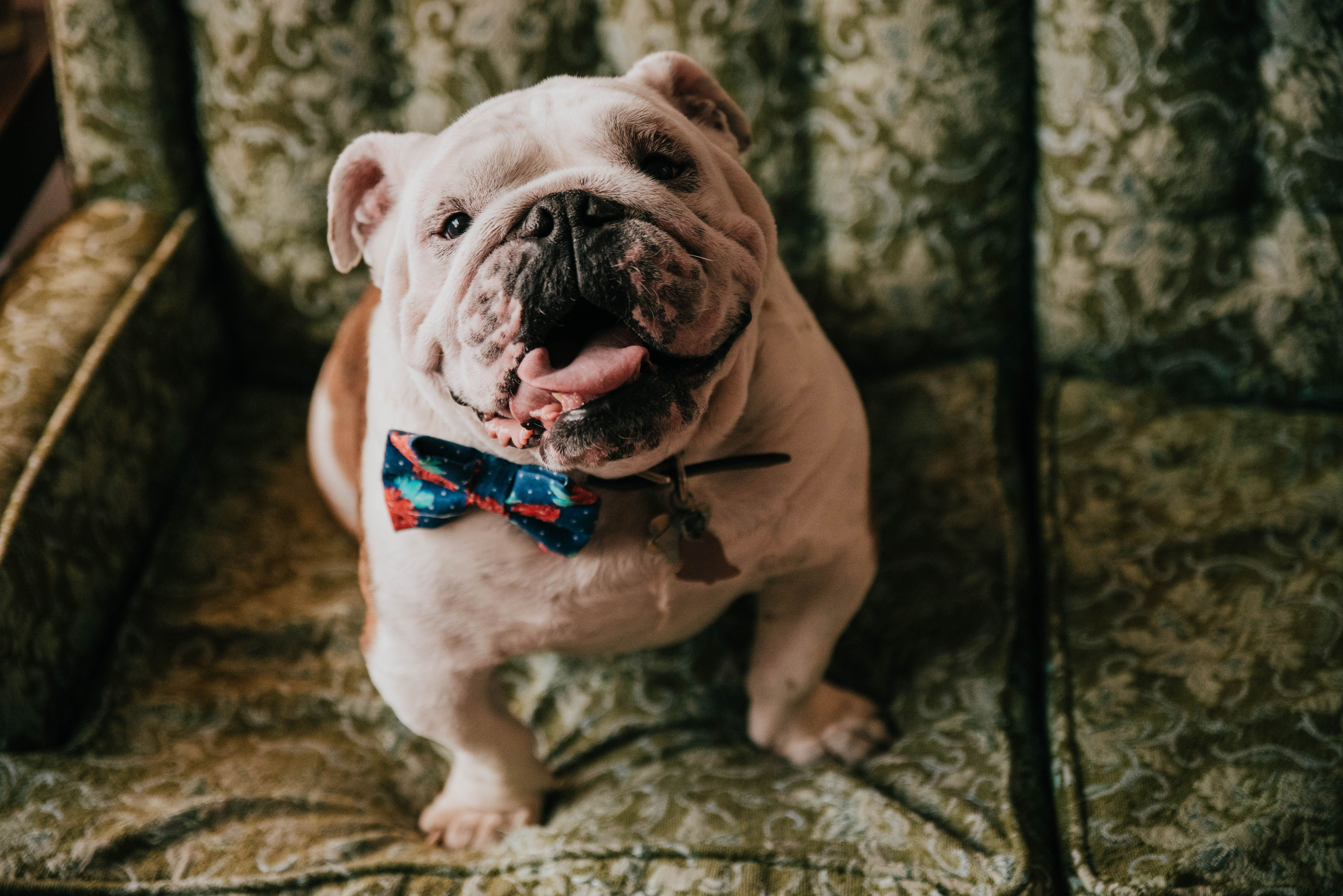 Dogs and weddings are perfection! in 2020 Photo