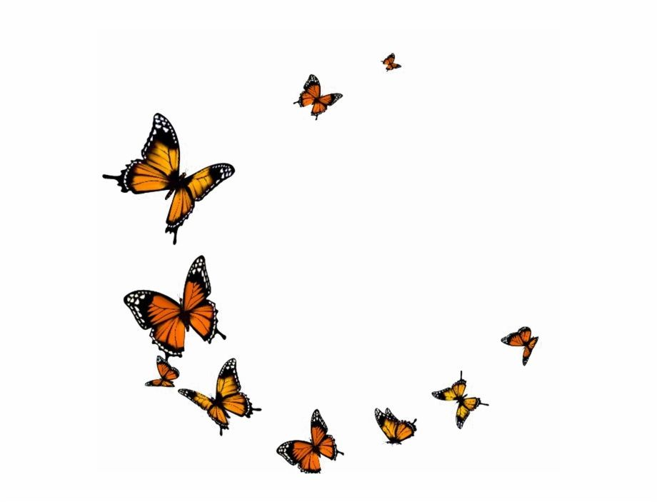 Flying Transparent Background Butterfly Png Butterfly Background Butterfly Watercolor Fly Drawing