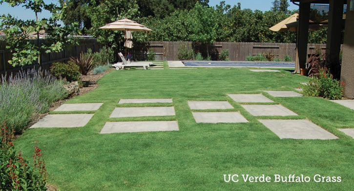 garden ideas replacing a thirsty lawn
