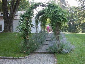 Garden design is really all about combining plants in different ways.  Here, one…