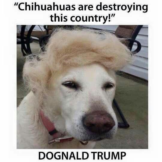 Dognald Trump Saturday Humor Trump Dog Funny Pictures