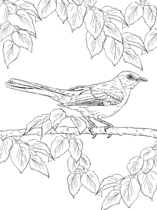 Click To See Printable Version Of Realistic Northern Mockingbird Coloring Page