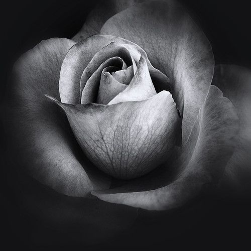Simple Black And White Photography Flower