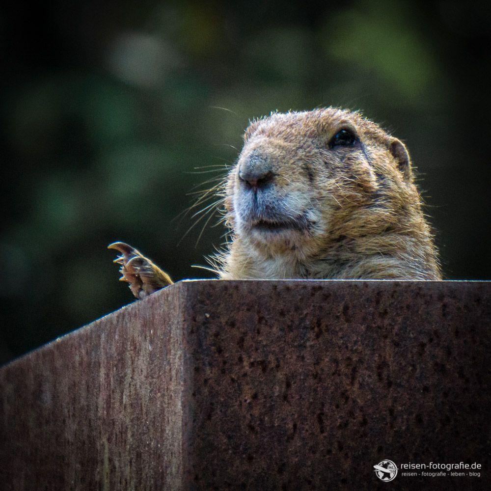 Erlebnis Zoo Hannover Bilder, Tiere, Eindrücke (mit