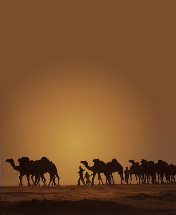 Al Dhafra Camel Festival Abu Dhabi