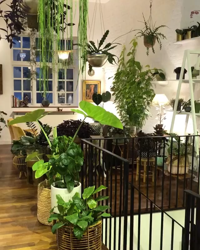 Photo of Indoor plant jungle in London