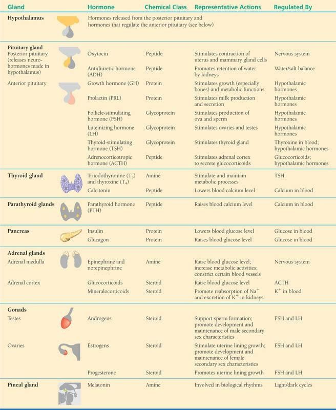 Just  little study refresher also endocrine system glands hormones target organs effects rh pinterest