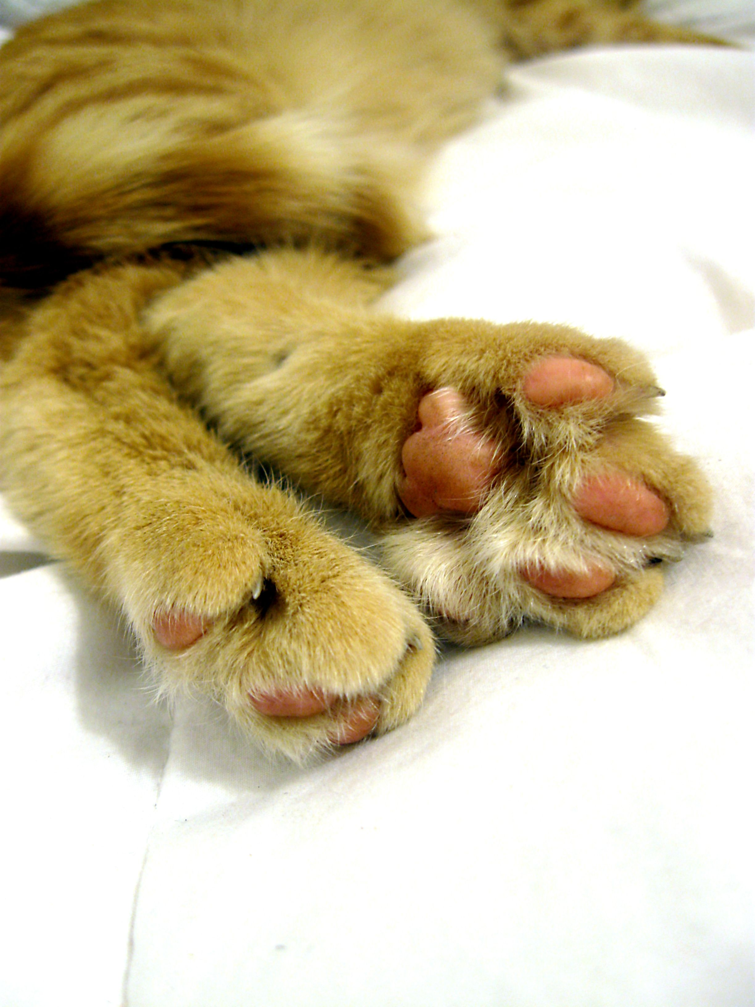 Cattasic Facts About Cat Paws Dog allergies, Dog