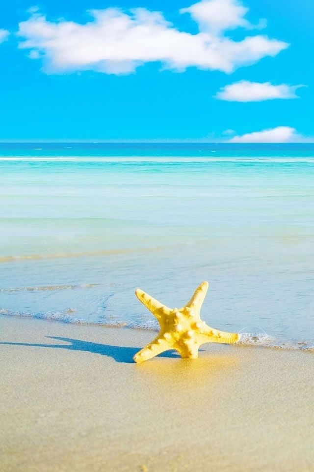 Maldives Beach Starfish Sand Summer Clouds Iphone Wallpapers Hd