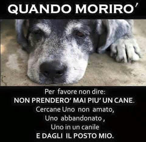 Pin di Elisabetta bordino su DOG | Citazioni sui cani, Citazioni sugli  animali, Adottare un cane