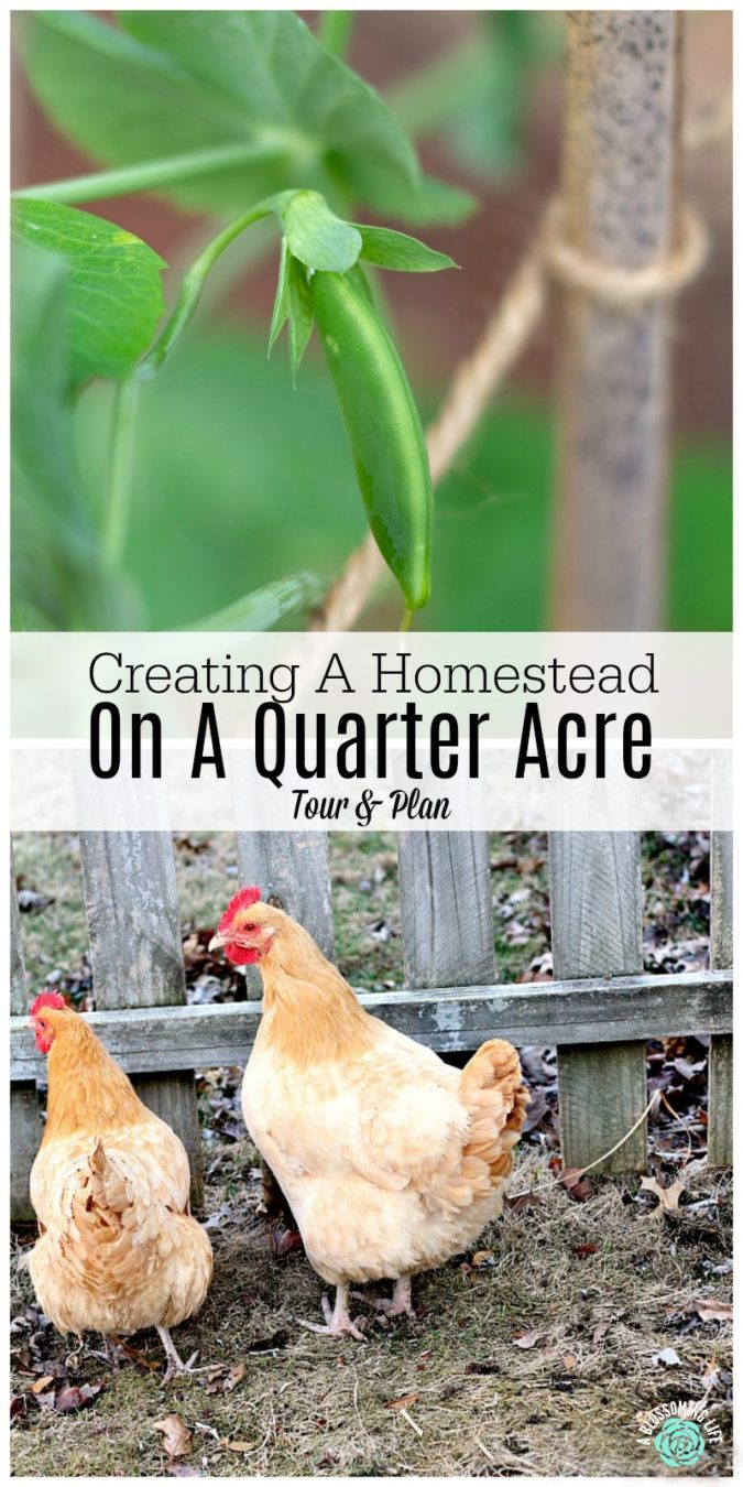 Creating A Homestead On A Quarter Acre - Tour And Plan in ...