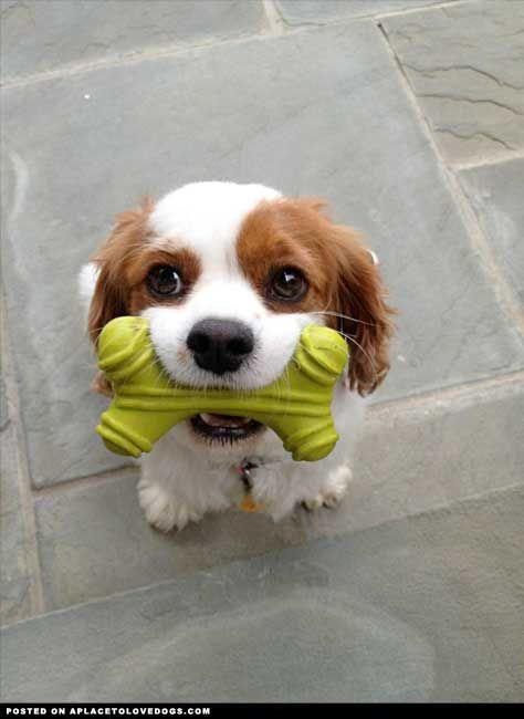 play play play! // hermosura!!!