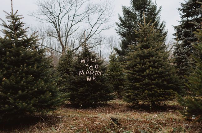 Christmas Tree Farm Proposal Chelsea Joe Green Wedding Shoes Tree Farm Proposal Christmas Proposal Christmas Tree Farm