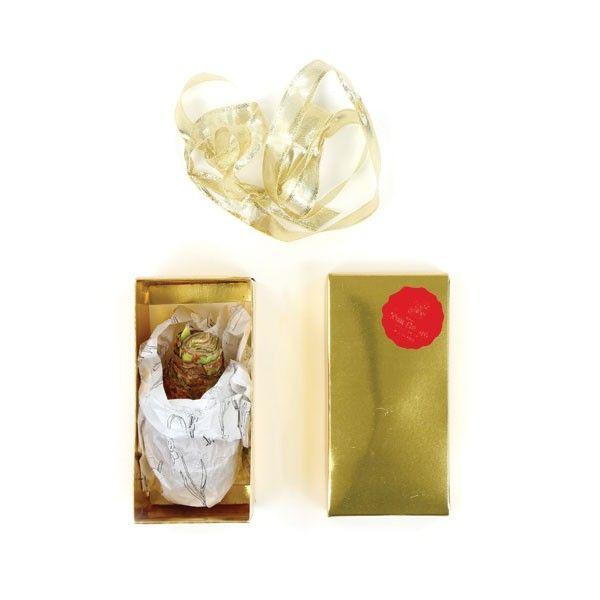 gouden kerstdoosje amaryllis
