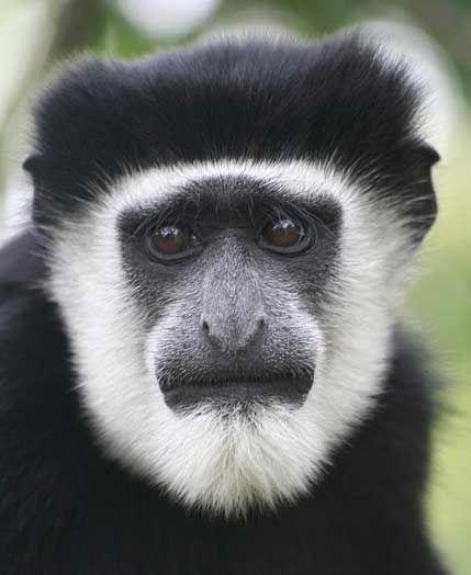 Types of Monkeys Types of monkeys Monkey pictures Pet