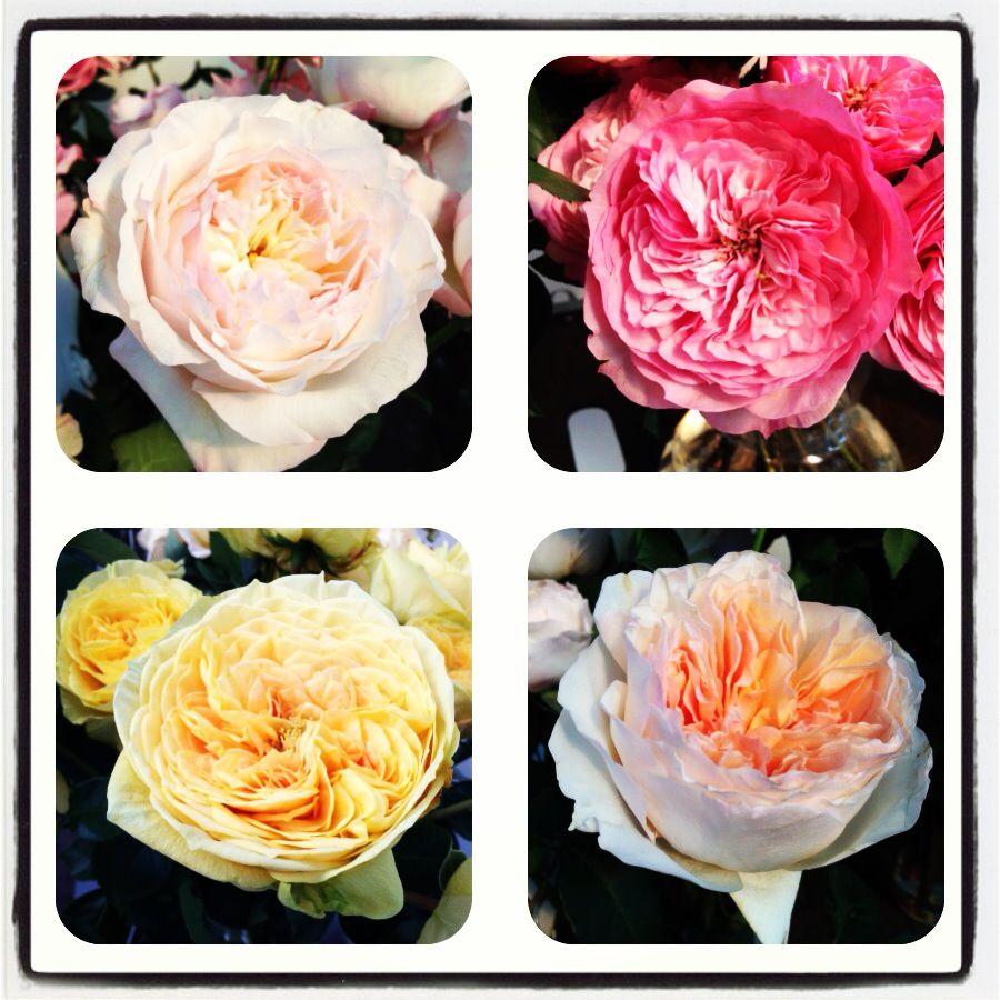 Rosas diferentes