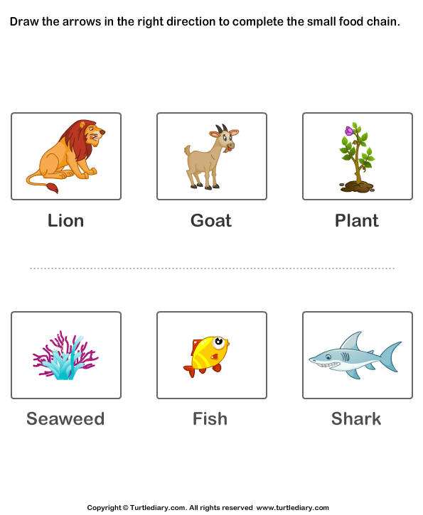 Complete the Food Chain - Fill in Arrows | Heather\'s Food Chain ...