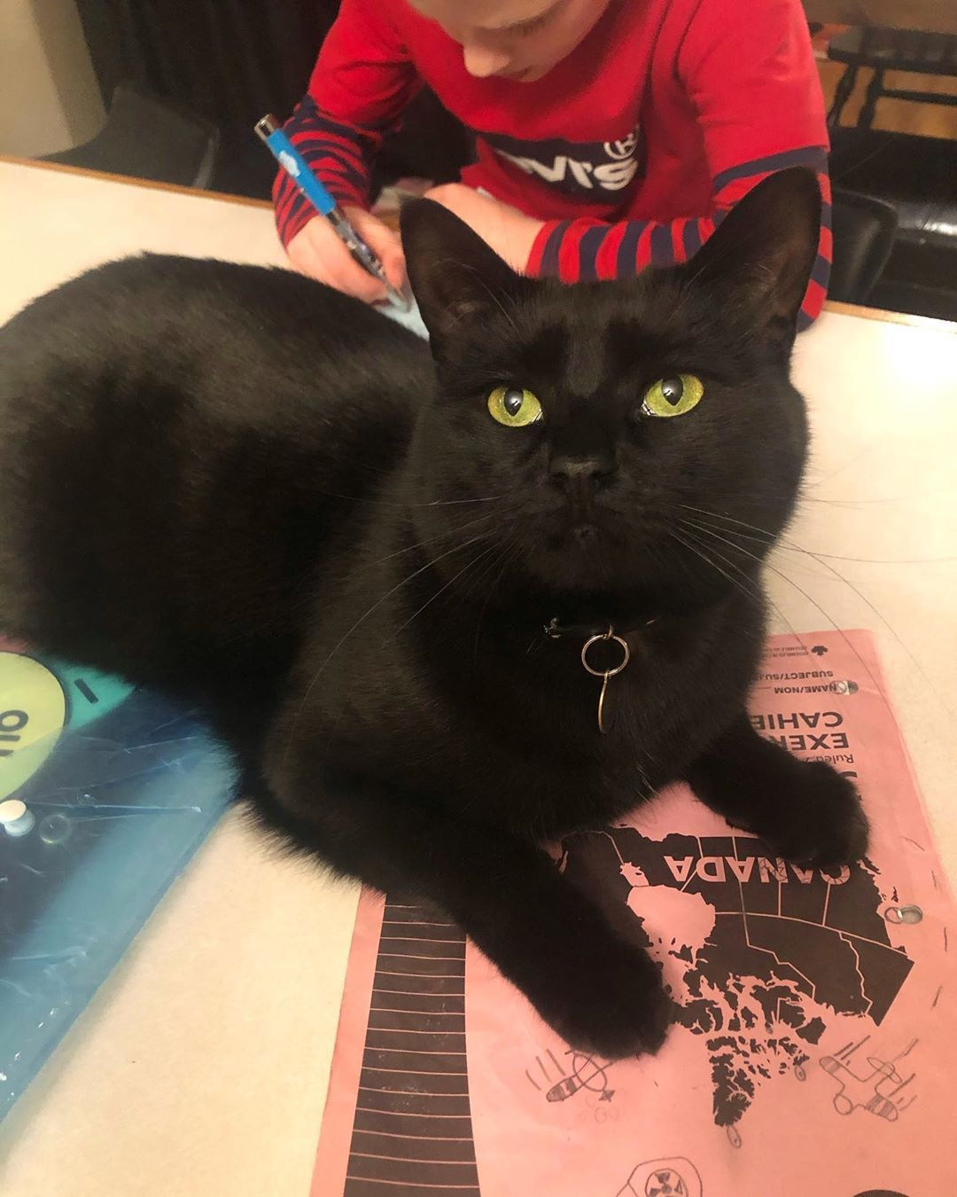 I Is A Big Help Wis Homework In 2020 Cats Cats And Kittens Animals