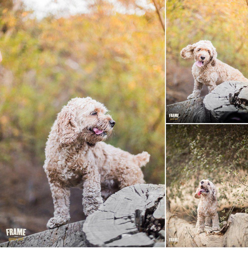 The best Christmas gift for true animal lovers: Dog ...