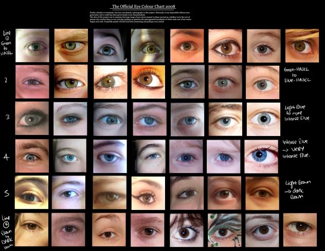 Human Eye Colour Chart By Delpigeon Eye Color Chart Eye Color Chart Genetics Rare Eye Colors
