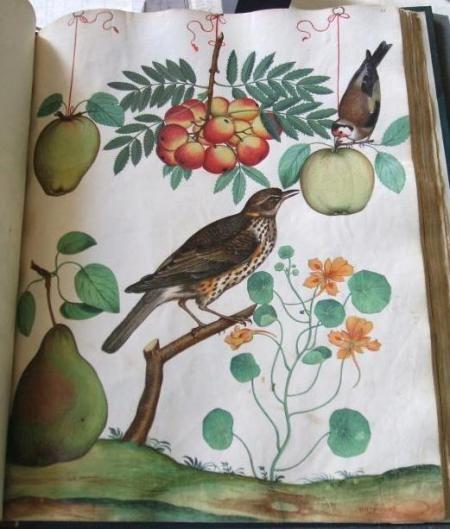 plate from italian manuscript, 1600 national trust