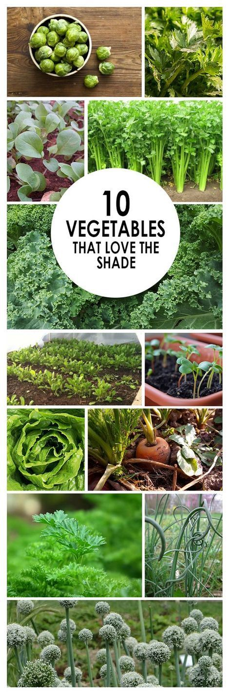 The Importance of Compost