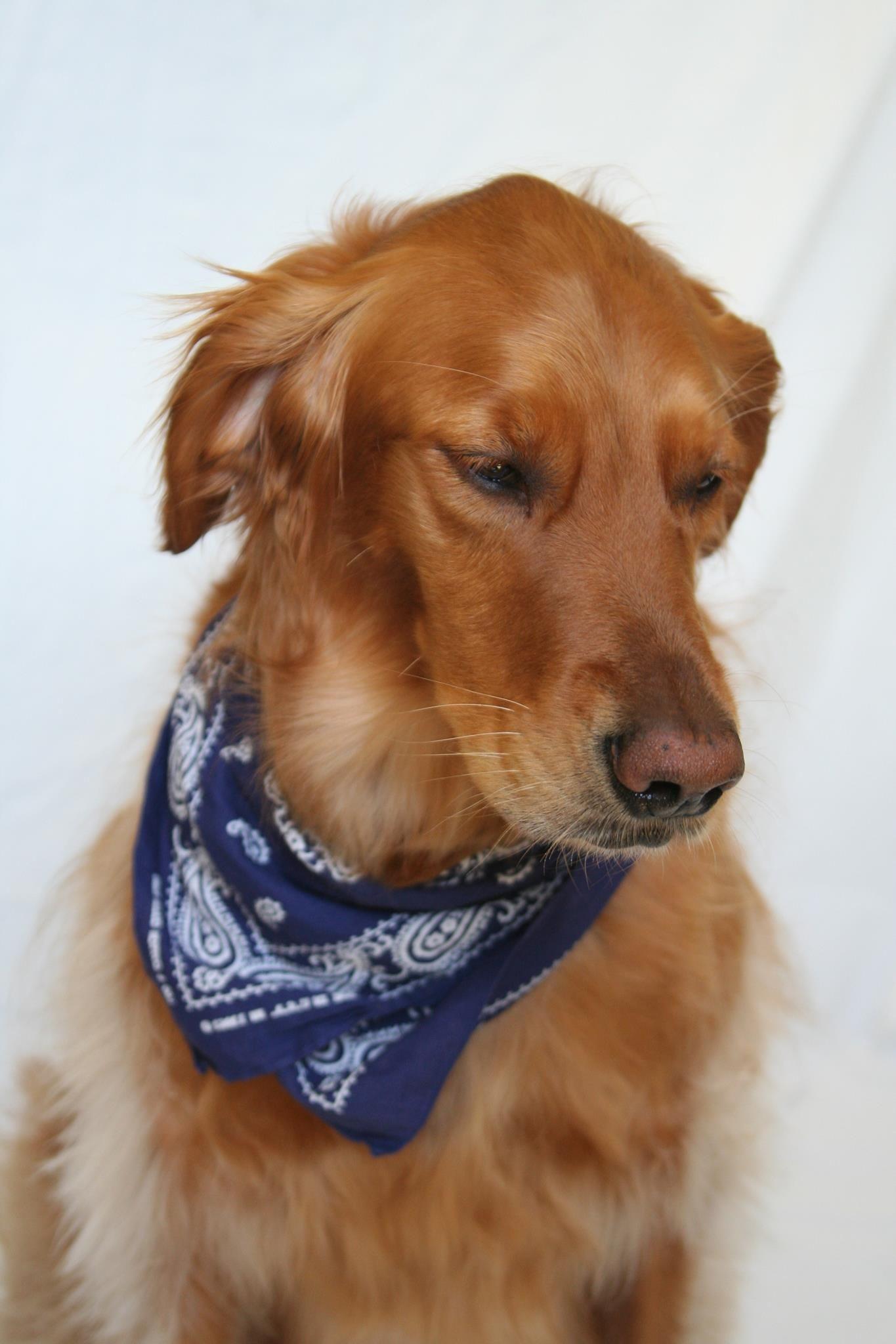 Glamour shot. Sadie the dog Dogs, Glamour shots, Animals