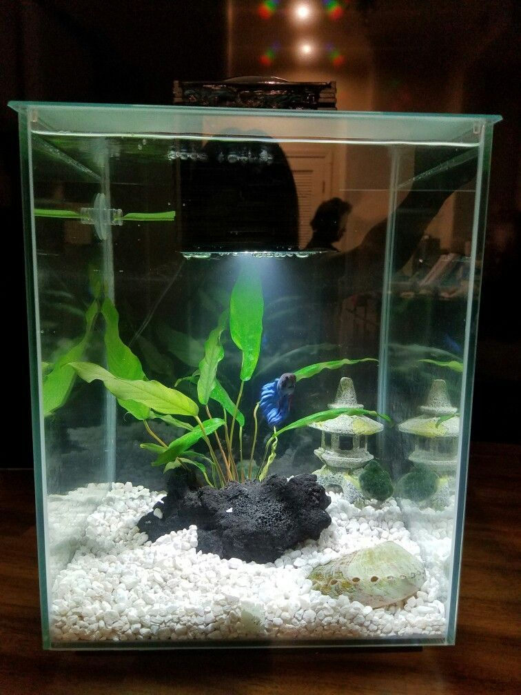 Betta Need 2 5 Gallons A Place To Hide Temperatures Of 72 80 Degrees Fahrenheit And A Filter Th Betta Fish Tank Tropical Fish Tanks Tropical Fish Aquarium