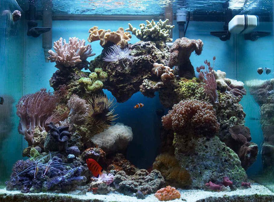37 gallon oceanic show cube 2x65w pc lighting scwd for 37 gallon fish tank