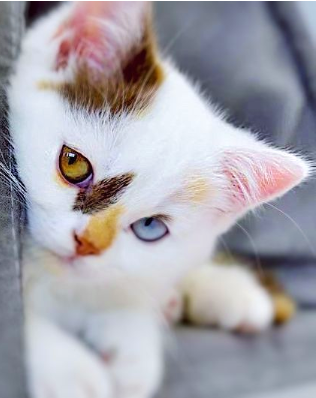 Have you ever wondered what it would be like looking through the eyes of a cat or how they get along in this world of ours? This article is captivating and informative!