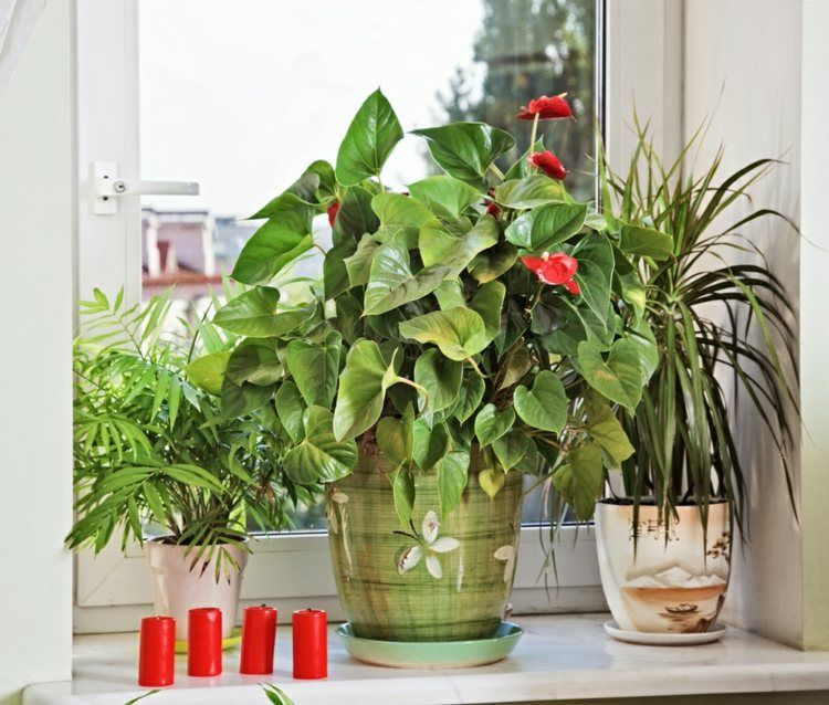 plante verte ne necessitant peu de lumiere