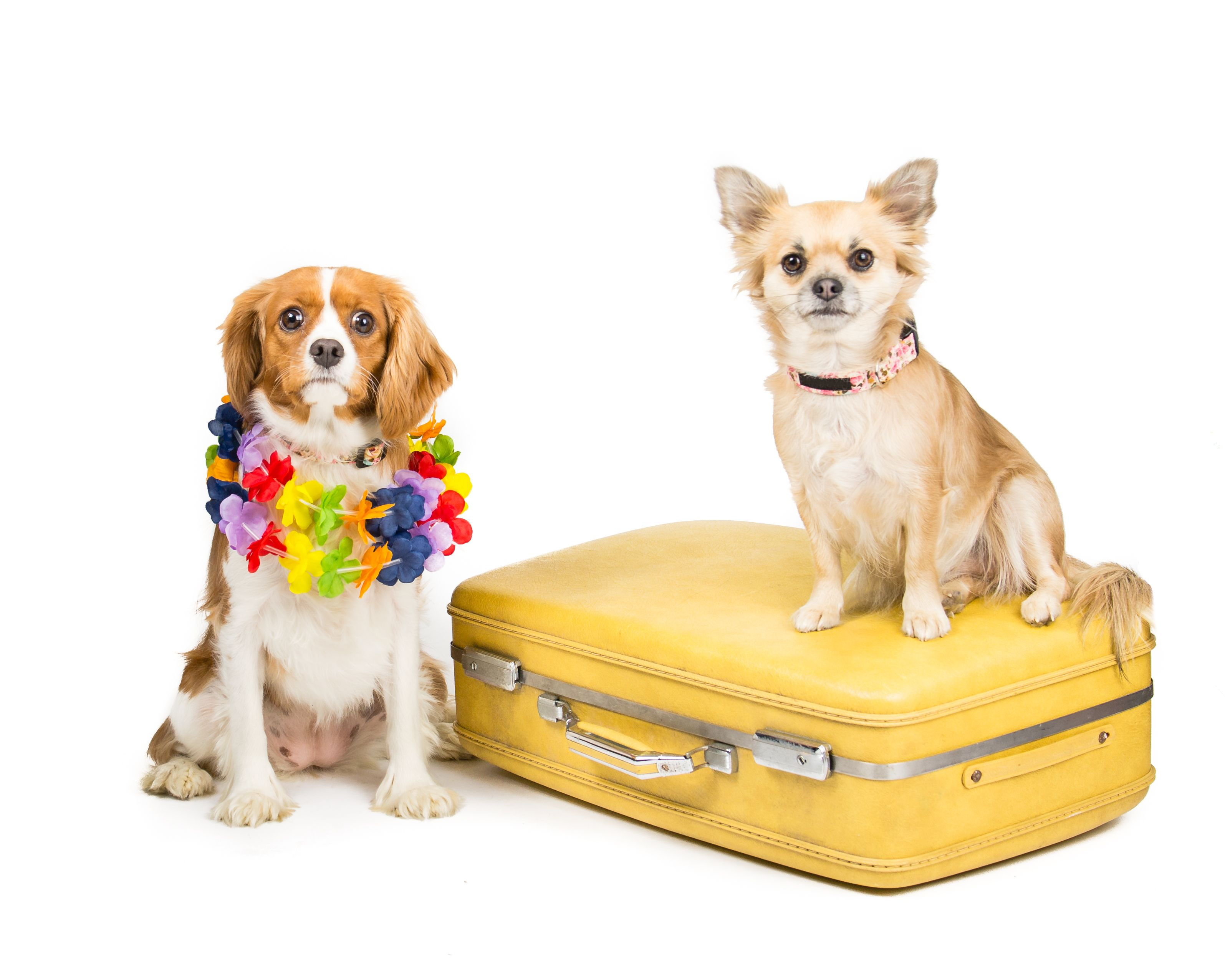 The UK's most #dog friendly cities