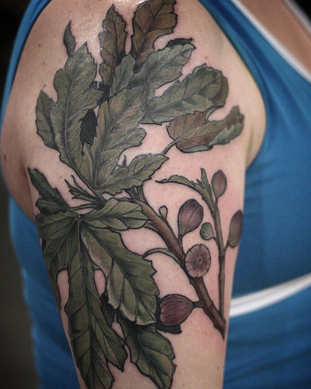 Fig branch by alice carrier alicerules botanical for Fig tree tattoo