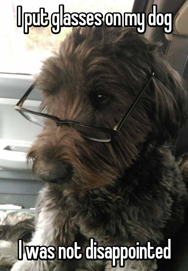 I put glasses on my dog I was not disappointed