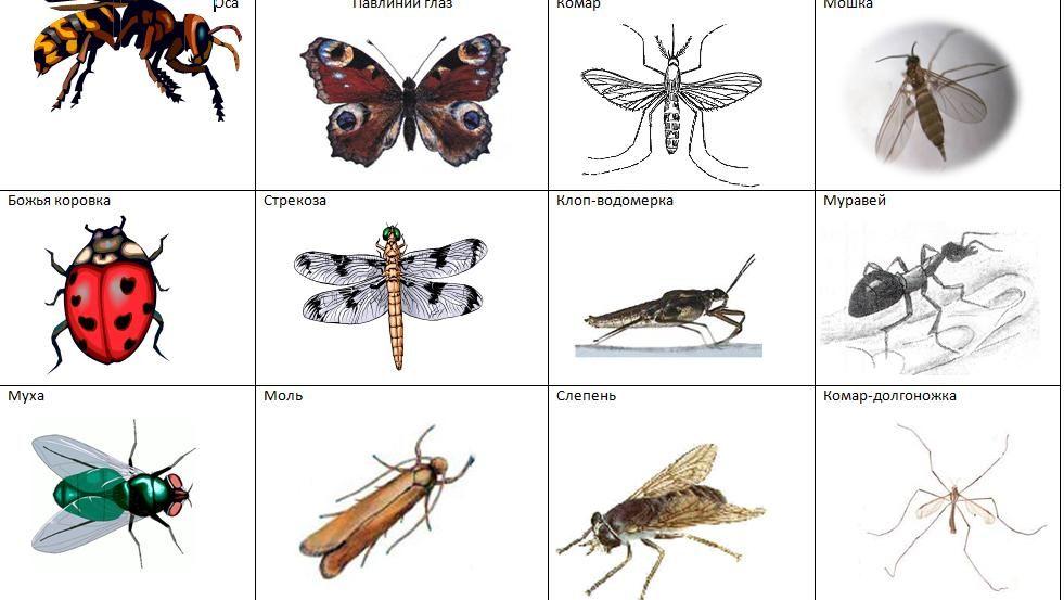 насекомые список с картинками учитывать, что