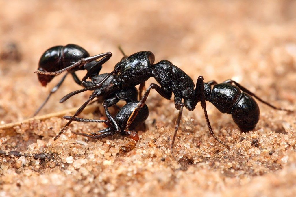 How to Get Rid of Ants in Your Yard, Naturally Ants
