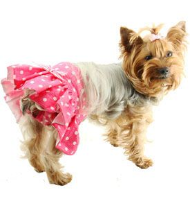 Love How This Dog Panty Has A Skirt Coco Loves Being Fancy Im