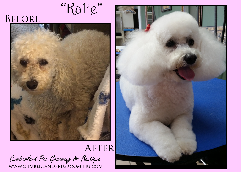 Pretty little Kalie has a story to tell.  You can read it here: https://www.facebook.com/cumberlandpetgrooming/photos/a.430460123830.207378.171989328830/10153658140773831/?type=3&theater