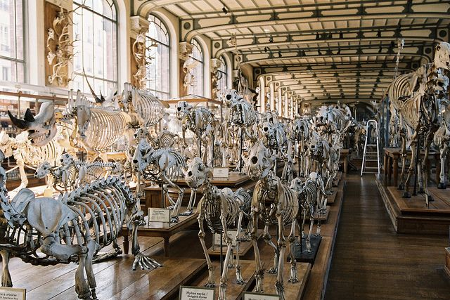 Galerie De Paleontologie Ceiling Lights Design Chandelier