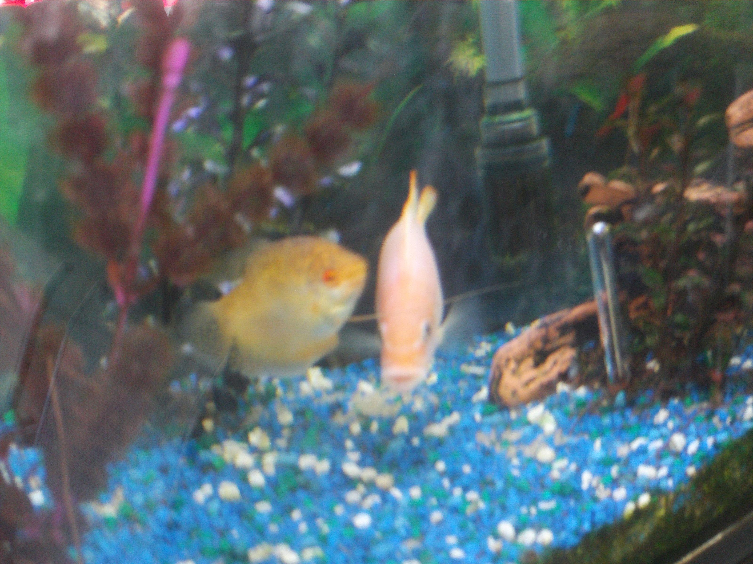 Freshwater aquarium fish boise idaho -