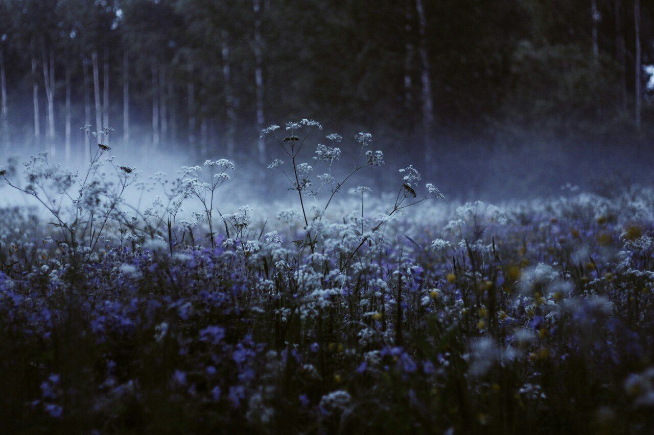 фото цветы в тумане спроста него