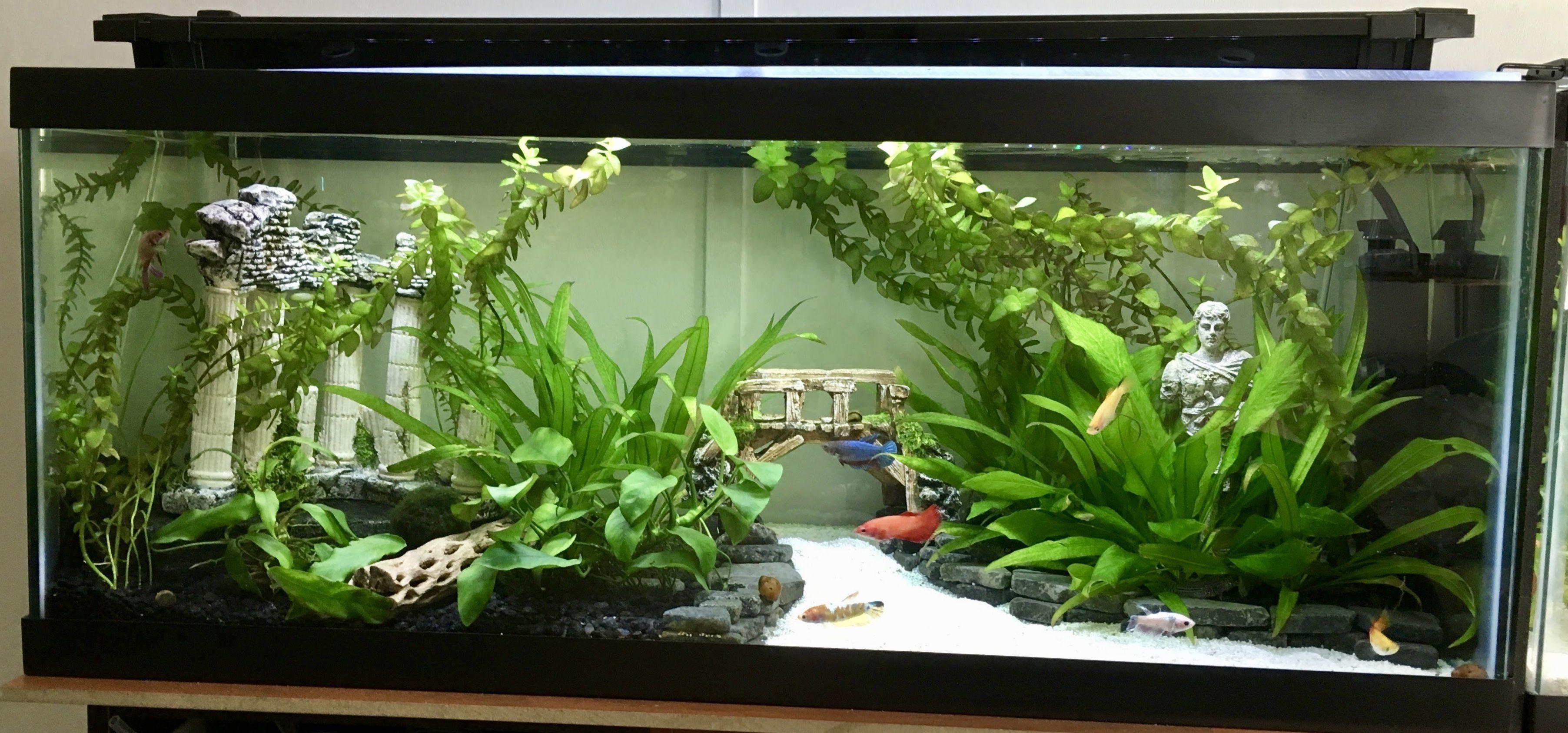 57fdc740278ede2c437b3b8c0319d6cd Jpg Community Fish Tank Betta Fish Fish Tank Themes