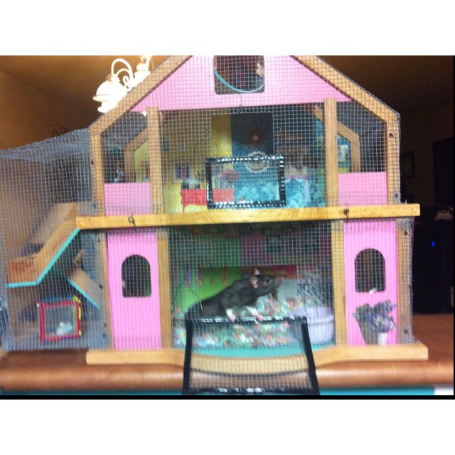 Doll house, rat house | Hamster cages, Diy rat toys, Rat house