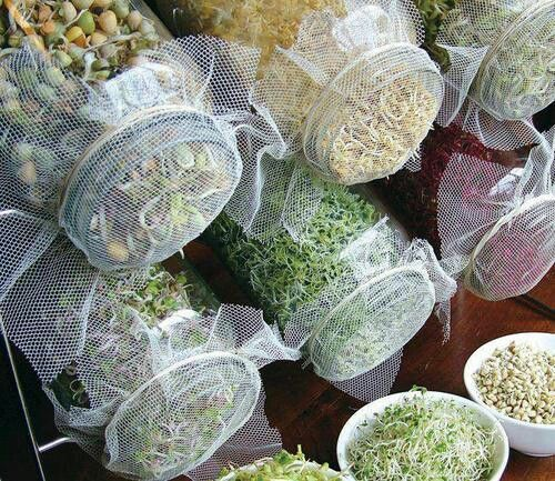 How to Grow Sprouts in a Jar | Growing food, Growing ...